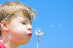 Spring freedom. Young boy blowing spring flower royalty free stock photo