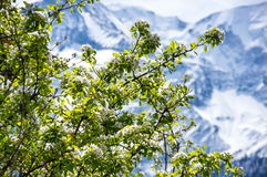 Spring in french Alps Stock Image