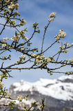 Spring in french Alps Stock Images