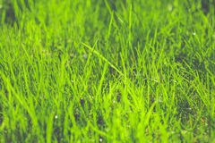 Spring fresh abstract background Stock Photo
