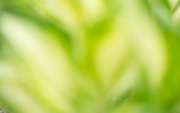 Spring fresh abstract background Royalty Free Stock Photos