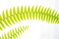 Spring fresh abstract fern background Stock Image