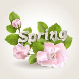 Spring. Fresh spring background with leaves and roses Royalty Free Stock Image