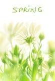 Spring fresh flowers Royalty Free Stock Image