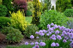 Spring fresh garden with shrubs and perennials Stock Photo