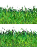 Spring fresh grass Royalty Free Stock Photo