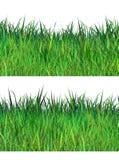 Spring fresh grass. Spring fresh green grass two stripes on white background. Digital illustration, hand drawn. For Art, web, nature banner, print, wallpaper vector illustration