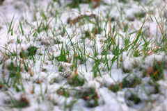 Spring  fresh green grass covered with snow. Frost in march or april. Shallow DOF, selective focus, pretty bokeh. Side Royalty Free Stock Image