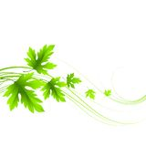 Spring fresh green leaves. Vector illustration. EPS10 Stock Image
