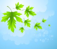 Spring fresh green leaves. Vector illustration. EPS10 Royalty Free Stock Photos