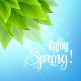 Spring fresh green leaves. Vector illustration. EPS10 Royalty Free Stock Photography