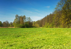 Spring, fresh meadow on a sunny day Stock Photo