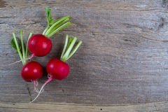 Spring fresh radishes background on a old wooden background. Top view Royalty Free Stock Images