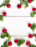 Spring fresh radishes frame on wooden background Stock Image