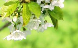 Spring freshness Royalty Free Stock Photo