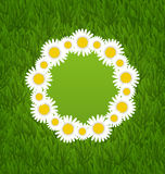 Spring freshness card with grass and camomiles flowers Royalty Free Stock Image