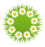 Spring freshness round card with grass and camomiles flowers Royalty Free Stock Image
