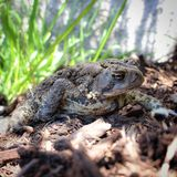 Spring. Frog, nature, amphibians, scenery Stock Photo