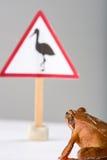 Spring Frog (Rana dalmatina) discovering a sign Stock Images