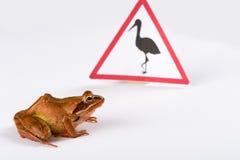 Spring Frog (Rana dalmatina) passing a sign Stock Photo