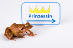 Spring Frog (Rana dalmatina) on it´s way to kiss the princess. German Version, Inscription means Princess Stock Photography