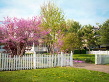 Spring Front Yard Royalty Free Stock Image