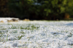Spring frost, green grass covered with white snow.  Royalty Free Stock Photo