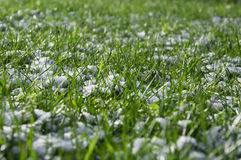 Spring frost, green grass covered with white snow Royalty Free Stock Photography