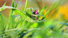 Spring frost,hoarfrost spring,plants covered with frost in spring stock video footage