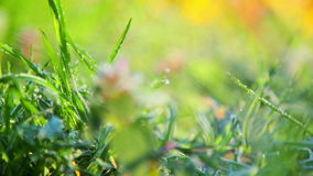 Spring frost,hoarfrost spring,plants covered with frost in spring stock footage