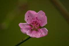 Spring fruit flower Stock Photo