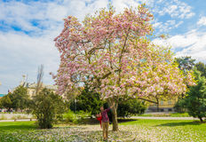 Spring is full of love. A couple poses in front of a cherry tree blossoming Royalty Free Stock Photography