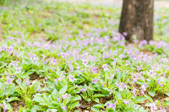 Spring, full of purple flowers Royalty Free Stock Image
