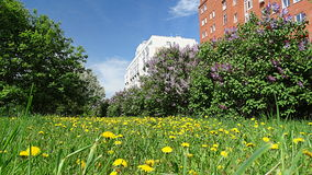 Spring is in full swing. Flowering Kemerovo city. Royalty Free Stock Photography