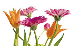 Spring garden 1 Royalty Free Stock Photography