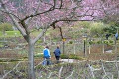 Spring Garden. People walking in a garden Stock Image