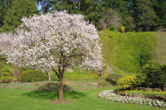 Spring Garden Royalty Free Stock Images