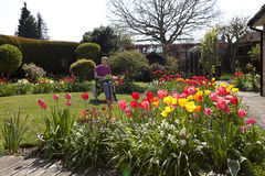 Spring Garden. View of a women collecting flowers from the spring garden Royalty Free Stock Image
