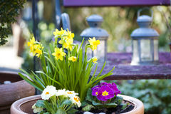 Spring in the Garden. Flower pot in the spring stock photos