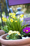 Spring in the Garden. Flower pot in the spring royalty free stock images