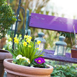Spring in the Garden. Flower pot in the spring stock images