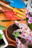 Spring in the garden Royalty Free Stock Photos
