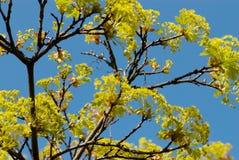Spring garden. Colored garden in the spring 2007 Stock Image