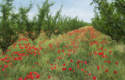 In spring garden Stock Image