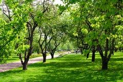 Spring garden. Apple spring garden in warm sunshine Royalty Free Stock Photos