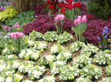 Spring garden. Ornamental spring flower garden tulips crocus and coleus stock photos
