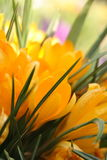 Spring in garden Stock Photography
