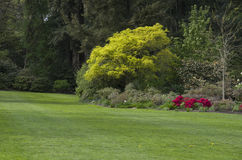Spring garden. Beautiful lawn with nice combination of colors of flowers and trees in a garden Stock Photos