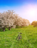 Spring garden and bike Royalty Free Stock Photos