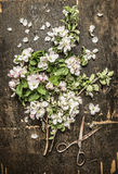 Spring garden blossom bunch and old rusty scissors on rustic wooden background Stock Photos